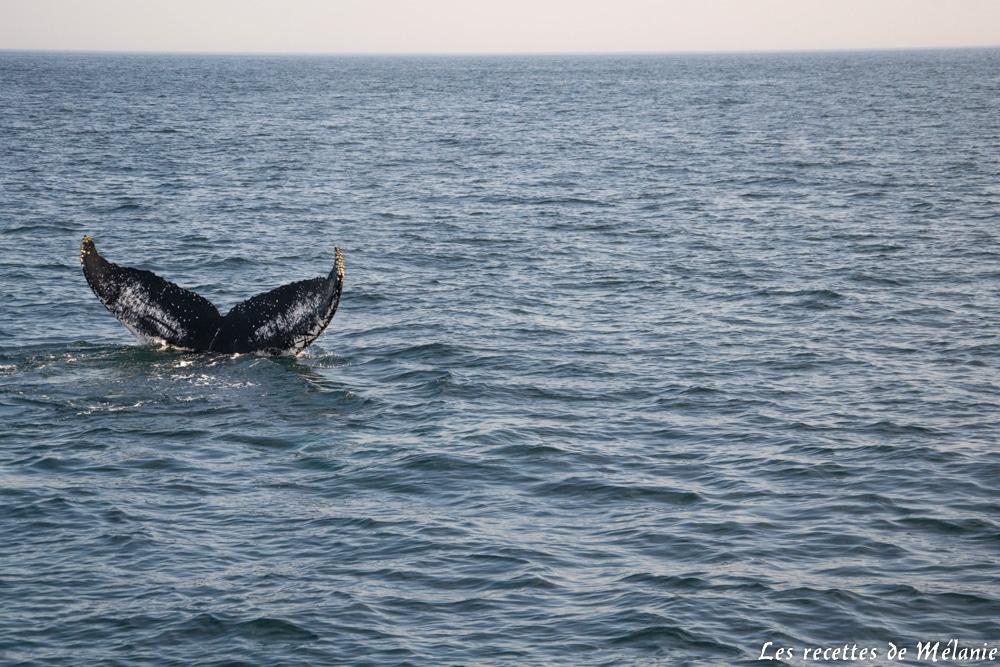Baleine à Boston