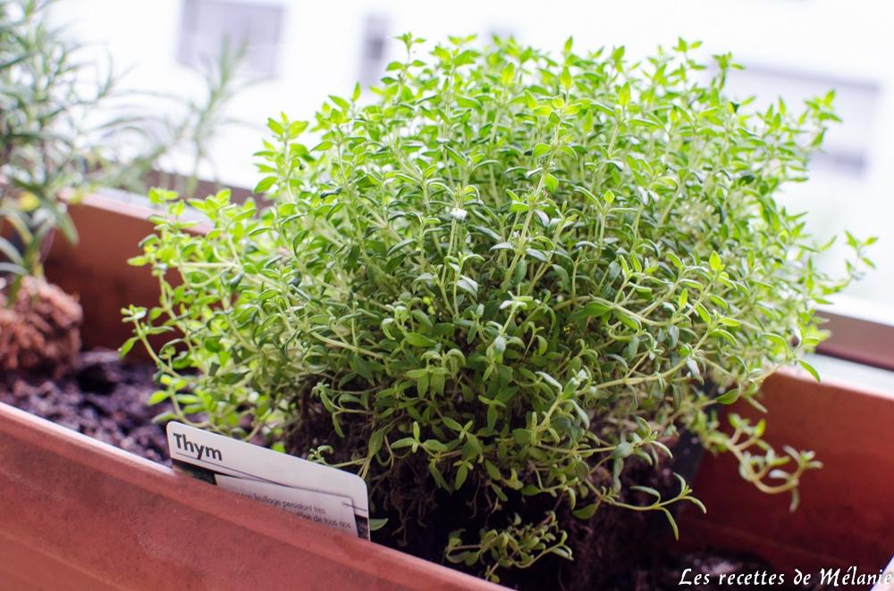jardinage-thym-1
