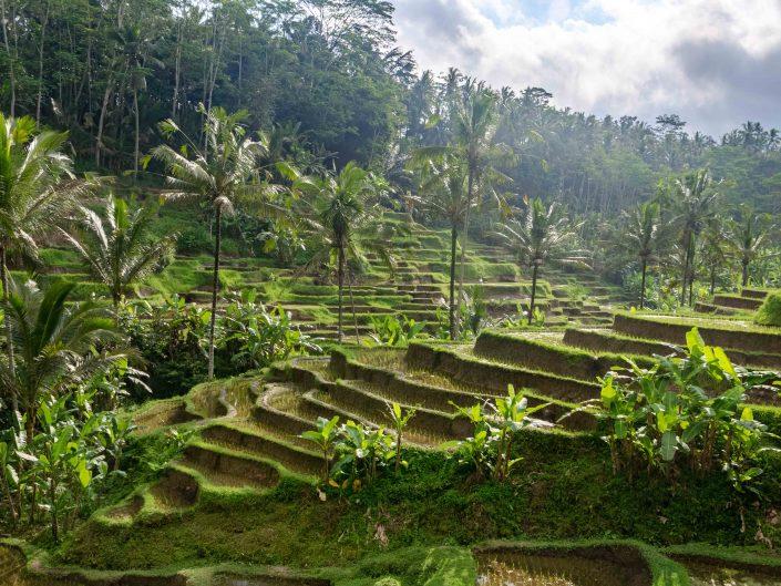 Notre séjour à Bali: à la découverte d'Ubud et de ses alentours