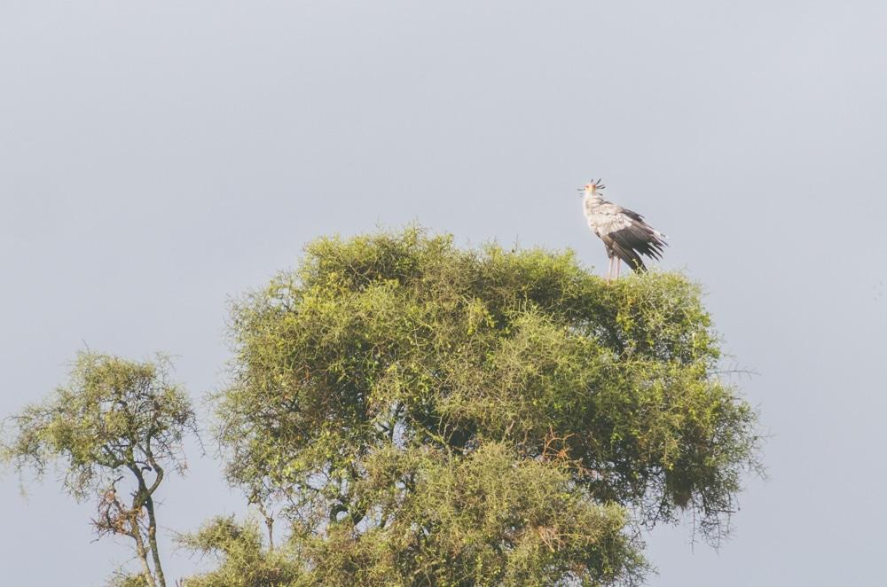 Que faire à Naïrobi (Kenya)