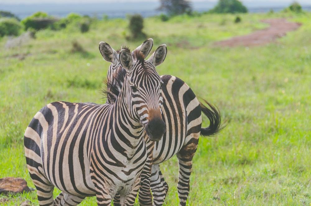Que faire à Naïrobi le temps d'un week-end (Kenya)?