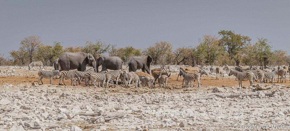 Etosha - 2 semaines en Namibie