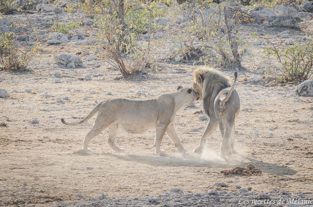 Etosha National Park - Namibie