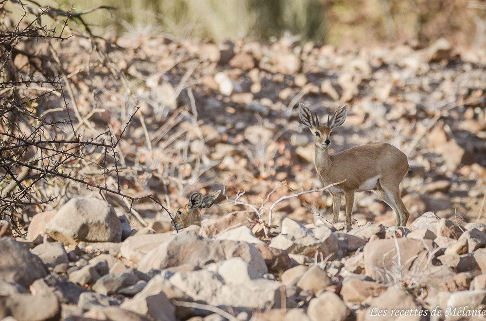 Dormir au milieu du Damaraland - Namibie