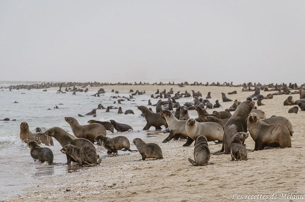 Faire du kayak avec les otaries et du 4x4 dans le désert - Namibie