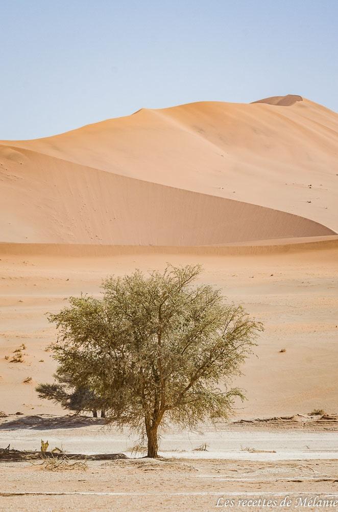 Un paysage emblématique de Namibie: les dunes de Sossusvlei