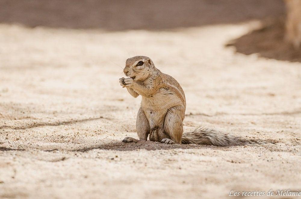 écureuil namibie