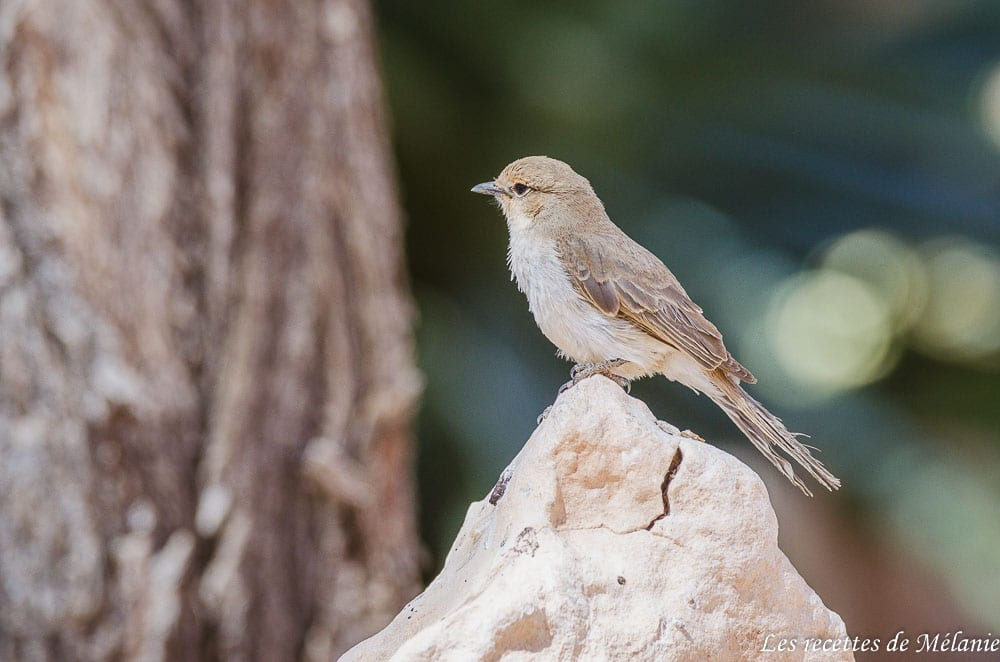 oiseau namibie