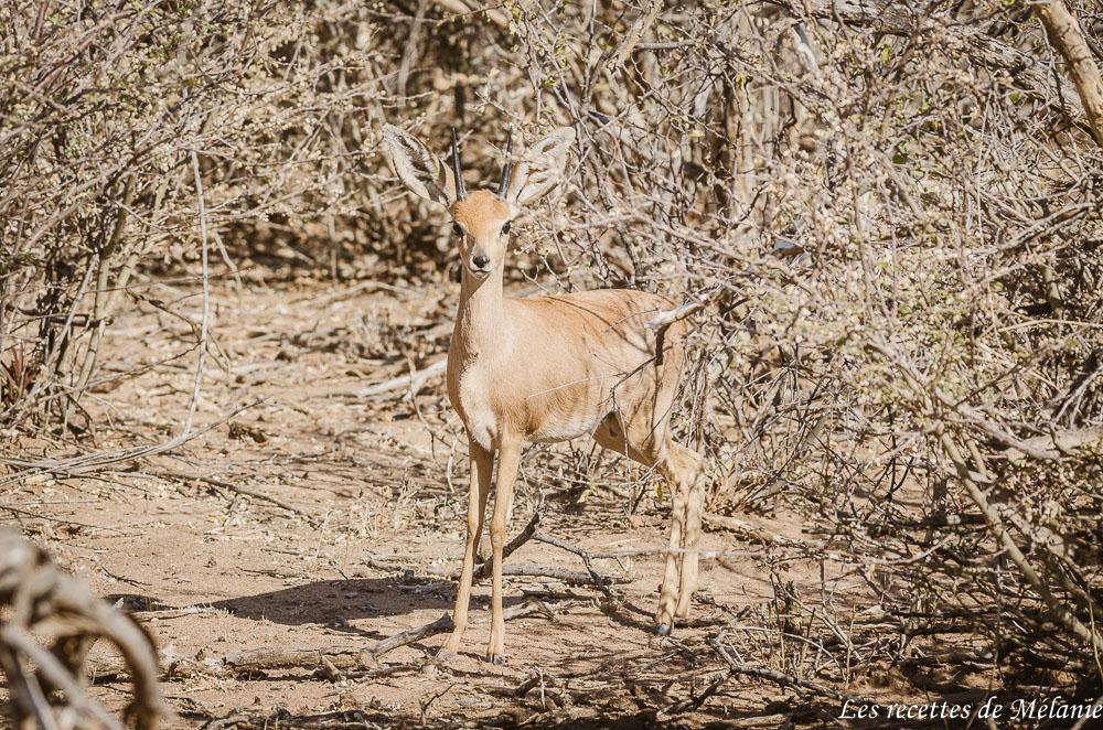 A la rencontre des léopards à Okonjima - Namibie
