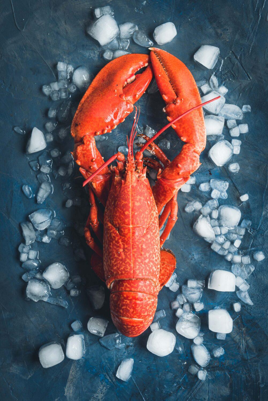 Un homard livré directement chez vous depuis la Bretagne grâce à la Perle de Marie Jo